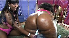 Two lusty black lesbians with huge curvy asses pleasure each other with toys