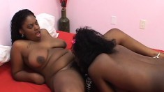 Busty black lesbians relish the sweet taste of each other's wet pussies